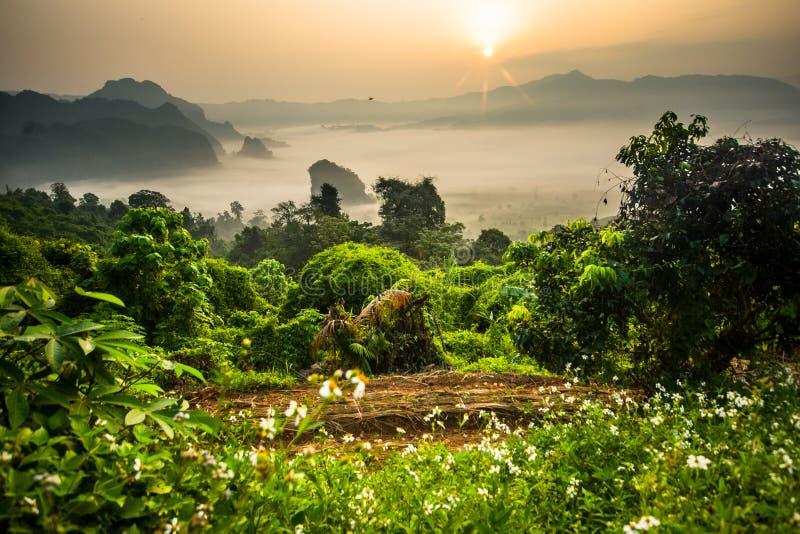 Morgennebel bei Phu Lang Ka stockfotos