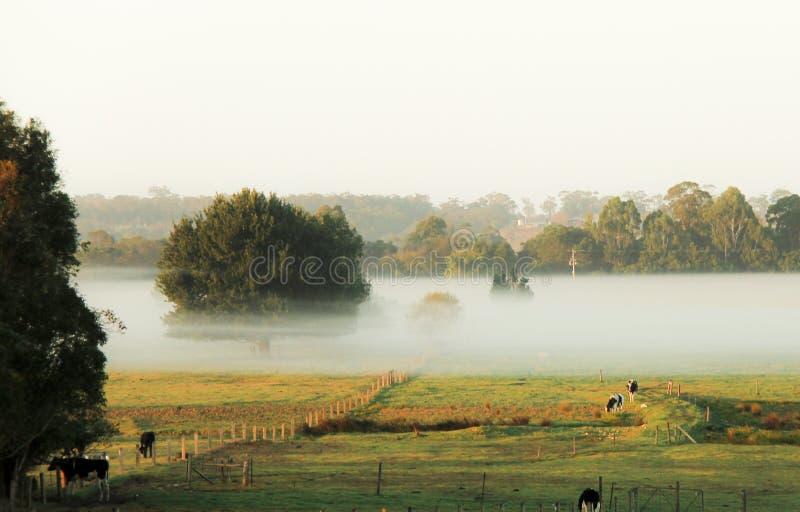 Morgennebel in der Weide des Bauernhofes lizenzfreies stockfoto