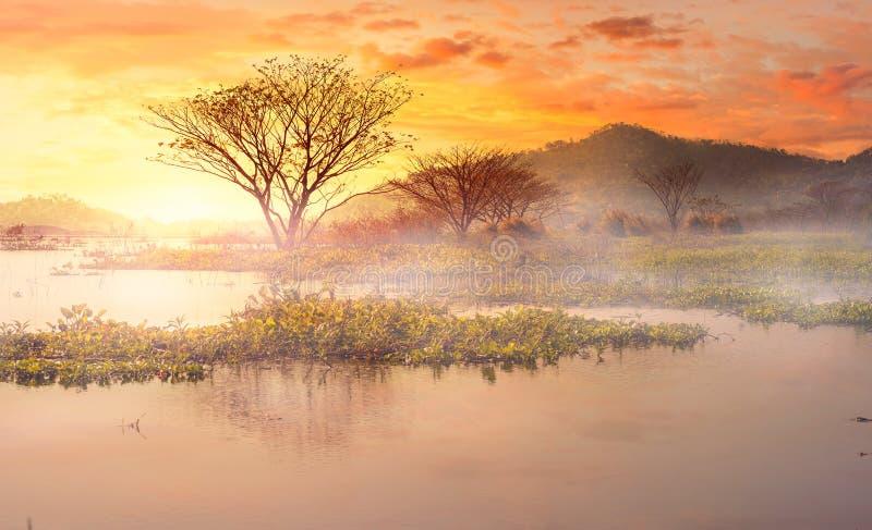 Morgennebel im See der Baum in der Wasser- und Gebirgsrückseite mit schönem Himmel lizenzfreies stockbild