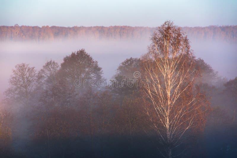 Morgennebel im Wald lizenzfreie stockfotos