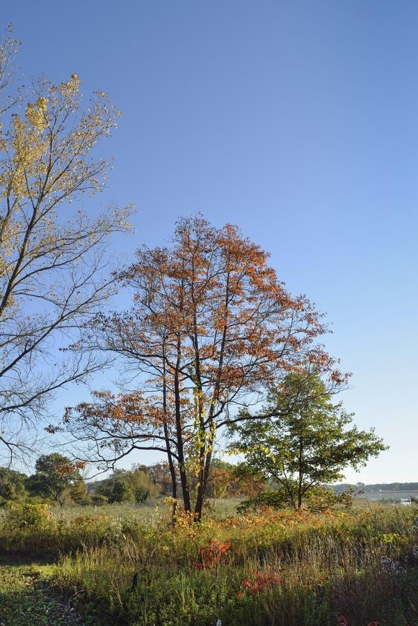 Morgensonne im Herbst lizenzfreies stockbild