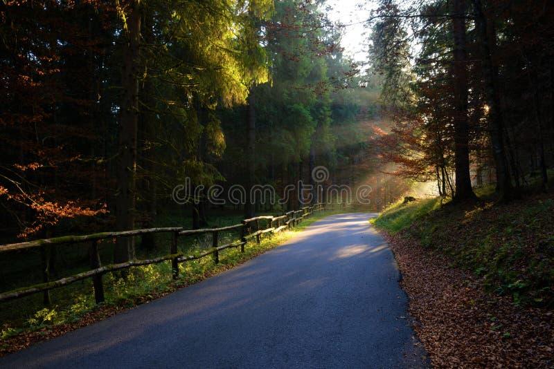 Morgensonne strahlt durch den FallWaldweg aus stockfotos