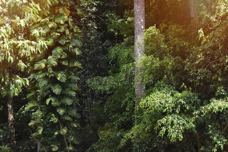 Morgensonnenaufganghintergrund im dichten Wald und leerer Raum für t stockbild