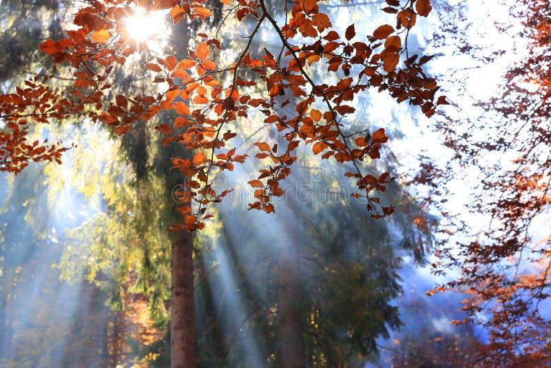 Morgensonnenstrahlen im nebeligen Wald lizenzfreie stockbilder