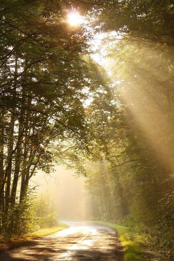 Morgensonnestrahlen fallen auf den Waldweg stockfotografie