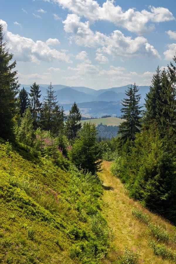 Morgenspaziergänge im Gebirgswald lizenzfreies stockfoto