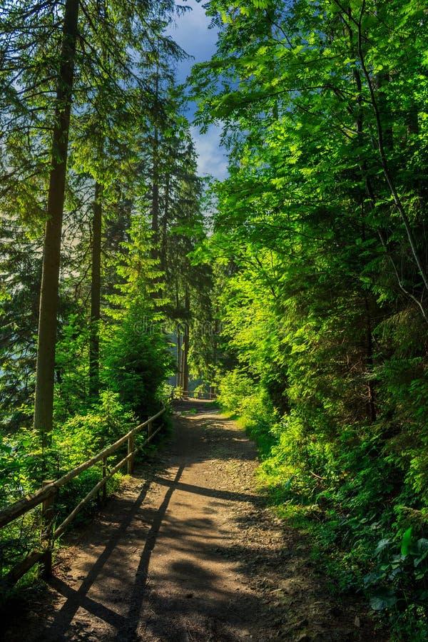 Morgenspaziergänge im Wald lizenzfreies stockfoto