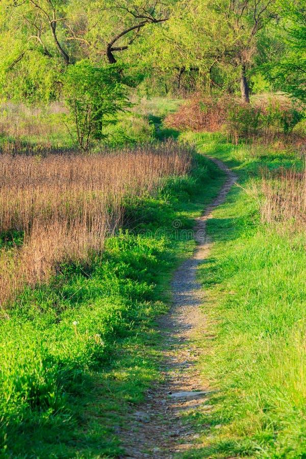 Morgenspaziergänge zum Wald lizenzfreies stockbild