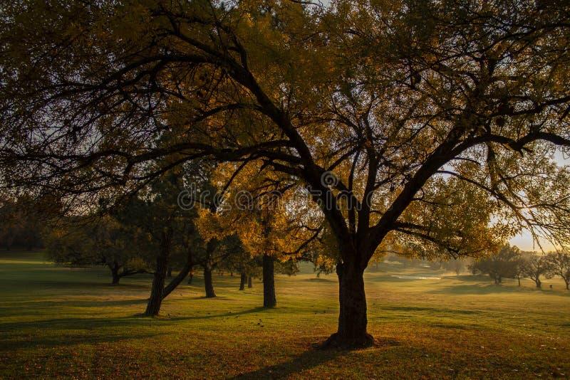 Morgenspaziergang-Sonnenaufgang auf einem Golfplatz lizenzfreie stockfotografie