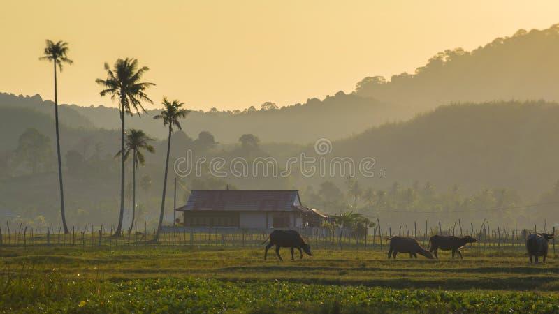 Morgenszene am Dorf lizenzfreie stockbilder