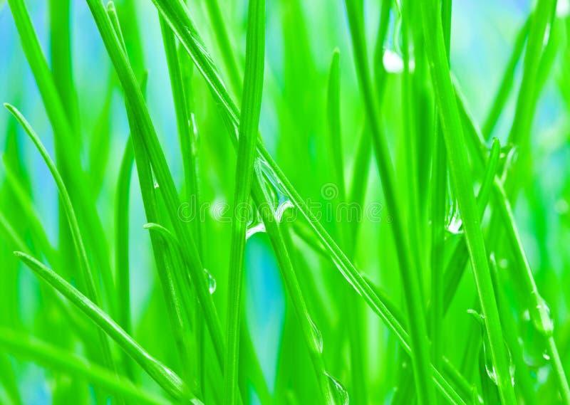 Morgentau auf grünem Gras zum Hintergrund lizenzfreie stockfotografie