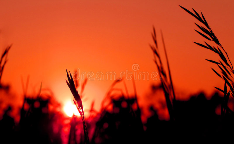 Download Morgon arkivfoto. Bild av nytt, växt, orange, detaljer - 280276