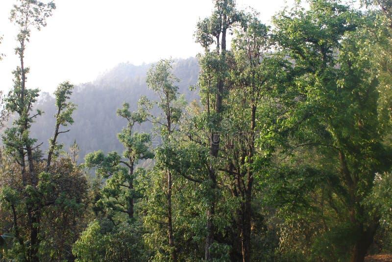 Morgon efter regn i skogen royaltyfri fotografi