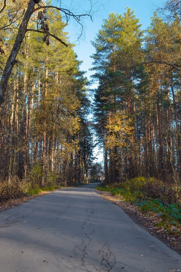 Morgon för höst för skogväg solig Ryssland för kremlin moscow för antagandedomkyrkadmitrov russia för region vykort vinter royaltyfria foton