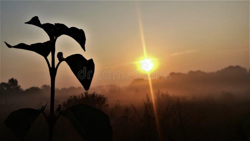 Morgon i öknen arkivbilder