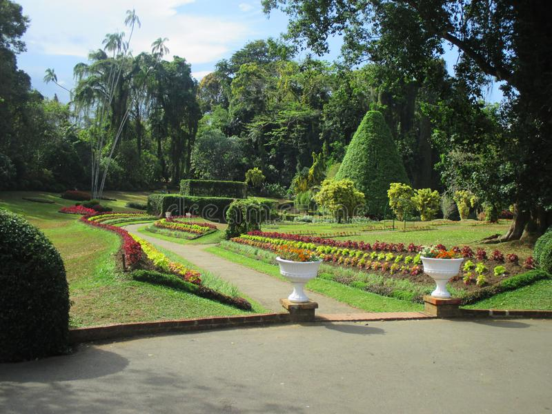 Morgon i botanisk trädgård royaltyfri foto