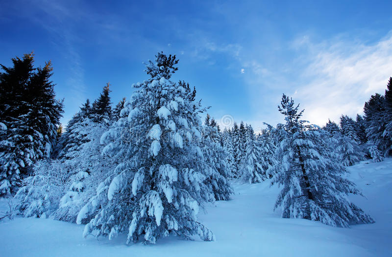Morgon i bulgarian vinterskog arkivfoto