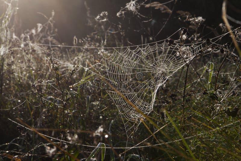 Morgon i en äng En daggig spiderweb arkivbild
