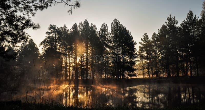 Morgon i skog med solstrålar och en dimma från floden royaltyfri foto