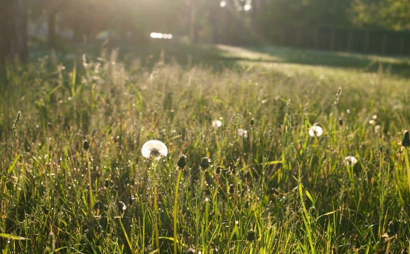 Morgon i skogen arkivfoto