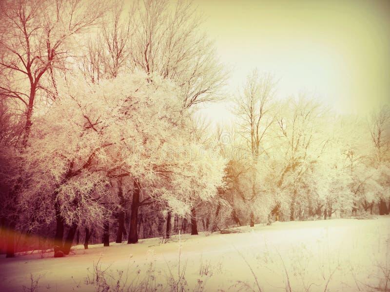 Morgon i skogen i vinter royaltyfri foto