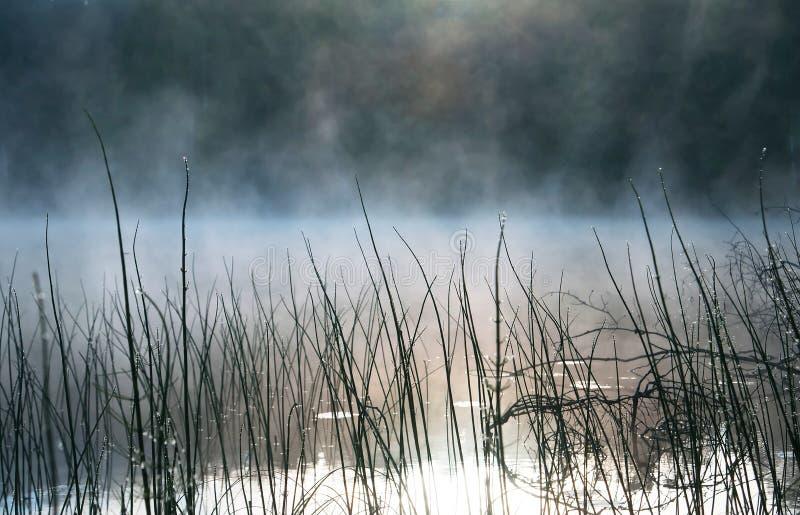 Morgon i träsket, träsk Vatten och gräs, dagg Karelia arkivbild