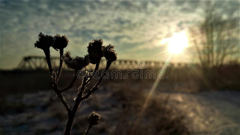 Morgon i vintern royaltyfria bilder