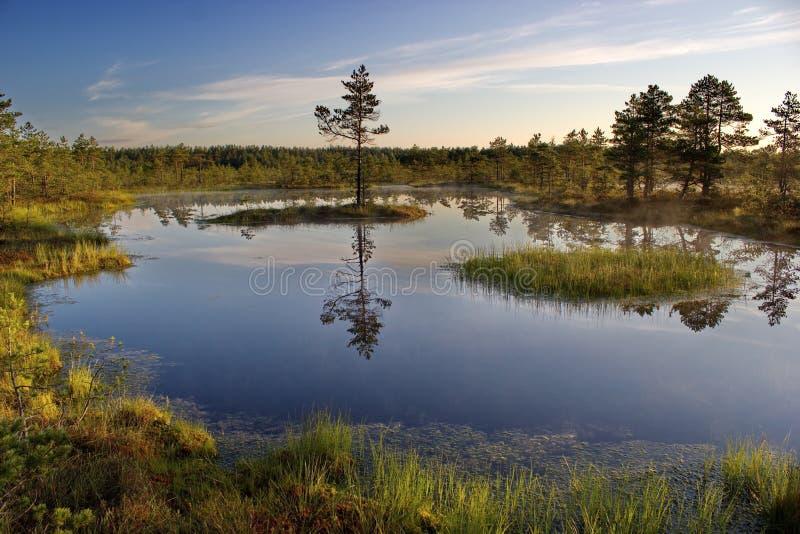 morgon på den Lahemaa nationalparken, Estland royaltyfria bilder
