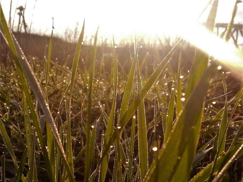 Morgon på våren arkivbild