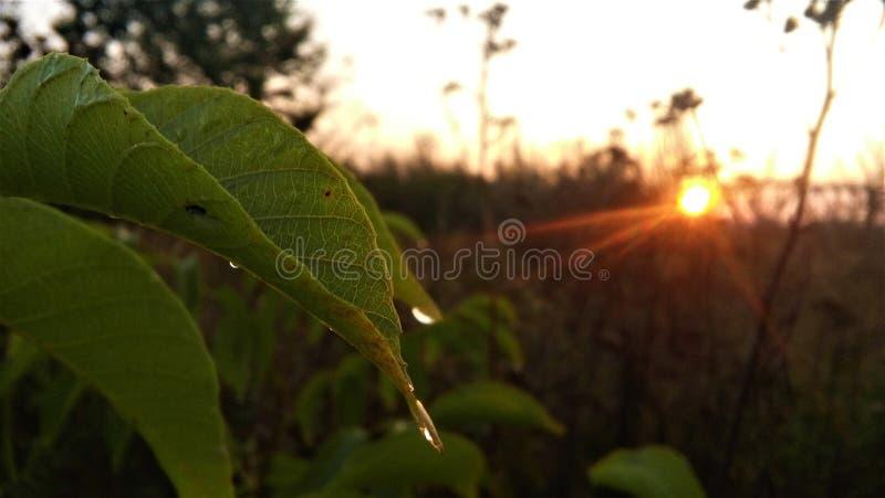 Morgon på våren arkivbilder