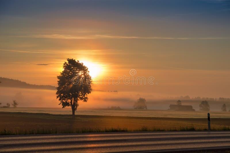Morgon som gryr solen över den disiga fält- och landsvägen arkivfoton