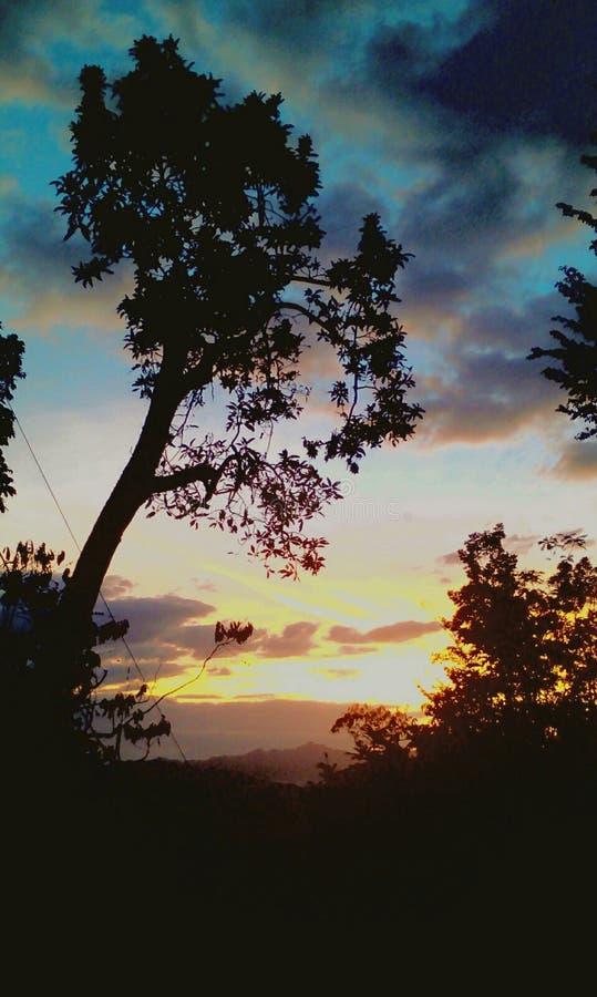 morgonatmosfären när solen började stiga och träden fortfarande ser mörka ut arkivfoto
