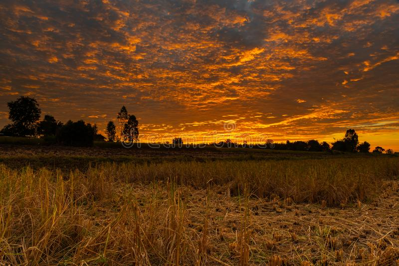 Morgonbrandhimmel och spridda moln med träd och jordbruks- fält som konturförgrund arkivfoto