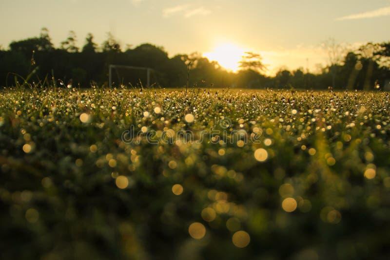 Morgondagg med värmen av solen arkivbilder