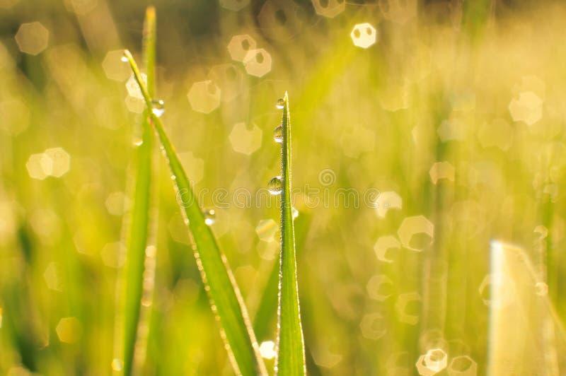 Morgondagg på ett gräs arkivbilder
