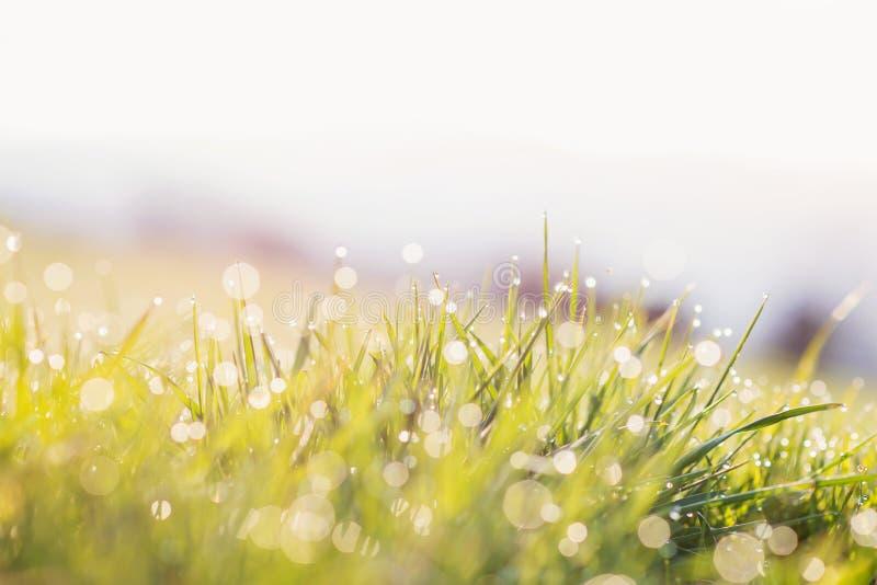 Morgondaggdroppar på blad av grönt gräs, soluppgång arkivbild
