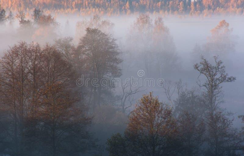 Morgondimma i skog fotografering för bildbyråer