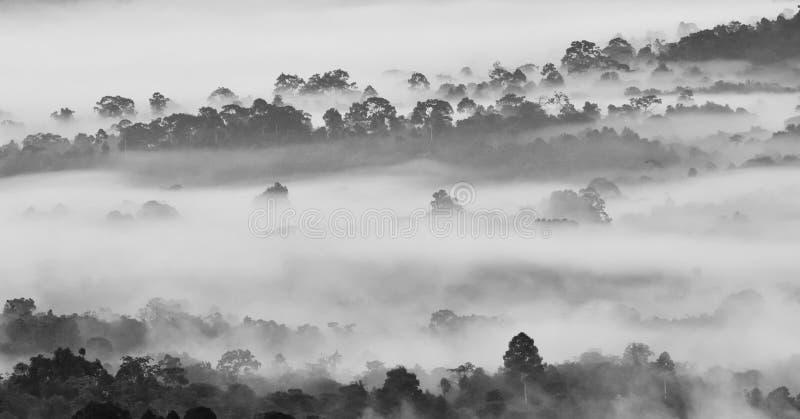 Morgondimma i tät tropisk rainforest i svartvit stil, dimmigt skoglandskap arkivbilder