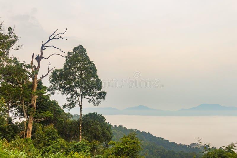 Morgondimma och trädöverkant i rainforest, KaengKraChan medborgarePA arkivbilder