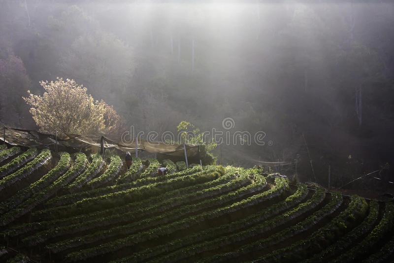 Morgondimma på berget royaltyfria bilder