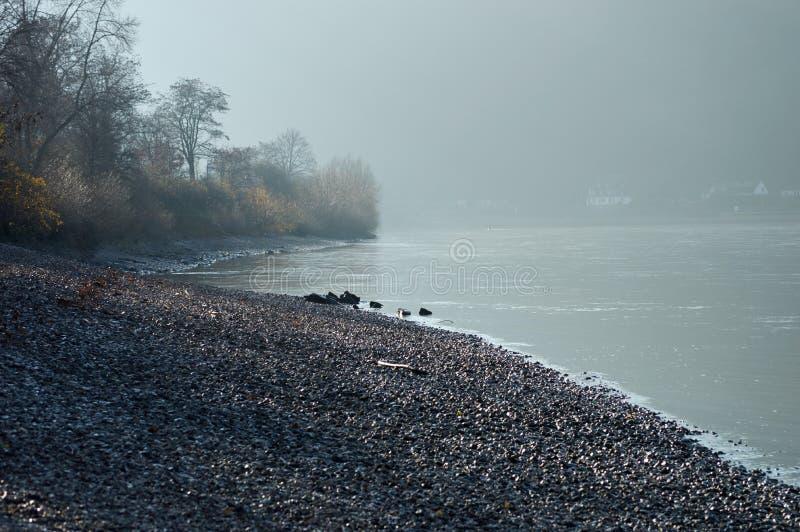 Morgondimma på floden royaltyfri fotografi