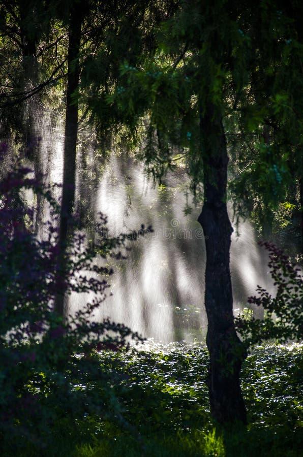 Morgonen av skogen royaltyfria bilder