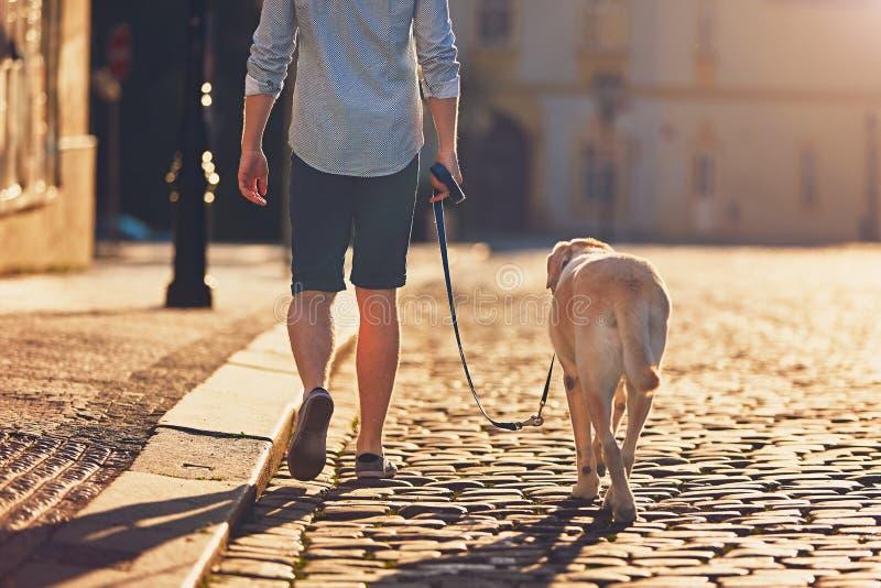 Morgonen går med hunden fotografering för bildbyråer