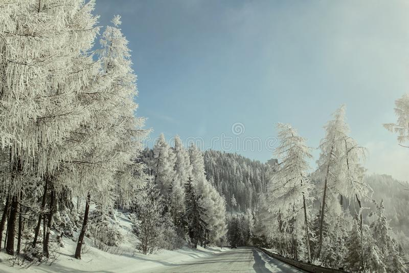 Morgonen på vinterskogvägen, träd på sidan tände vid solen, cov royaltyfri bild