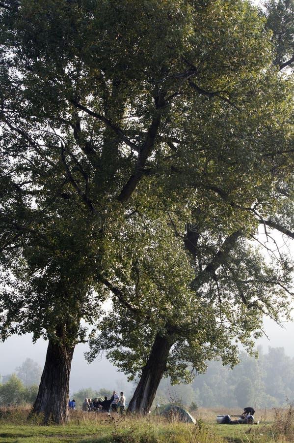 Morgonen under trädet arkivfoton