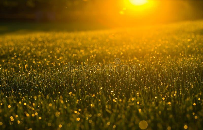 Morgonfieldgrass royaltyfri fotografi