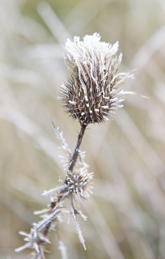 Morgonfrost med oskarp bakgrund royaltyfri fotografi