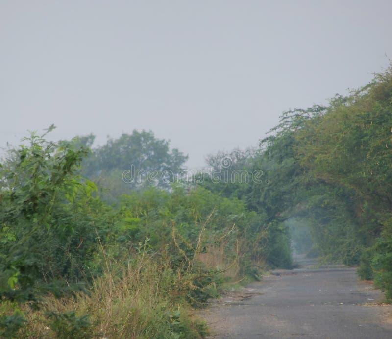 Morgongryningbild av den lantliga landsvägen som omges av träd arkivbilder