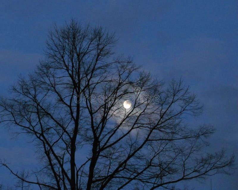Morgonhimmel i vinter med månen royaltyfri bild