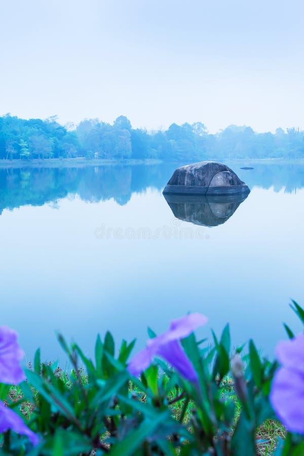Morgonlandskap av sjön med violetta blommor i blått dimmigt, fokus på den stora kiselstenen i lugna sötvatten royaltyfri bild